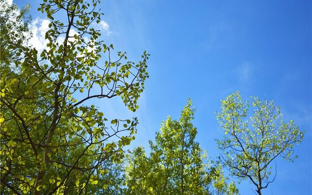 1344 Deer Trail Road - photo 8