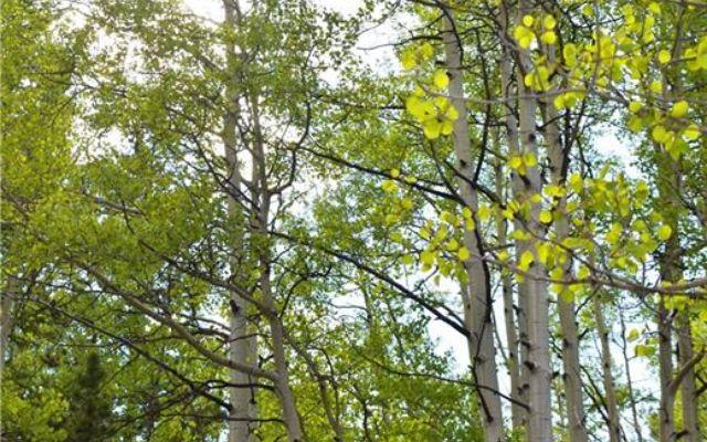 1344 Deer Trail Road - photo 9