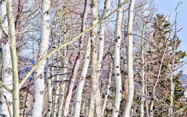893 Lumberjack Road - photo 16