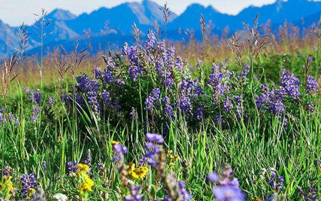 352 Meadow Drive P-5 - photo 16