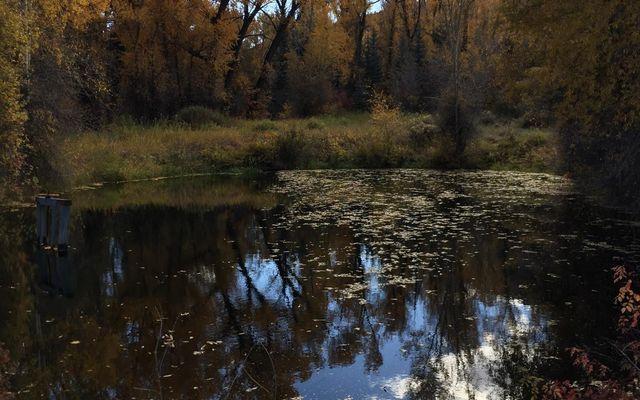 242 Brett Trail - photo 6