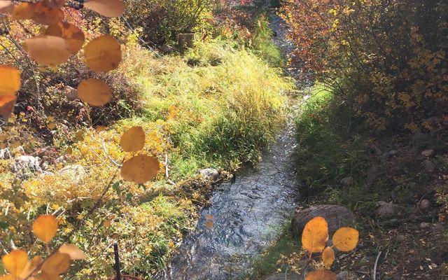 242 Brett Trail - photo 9