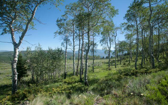 92 Pine Marten - photo 1