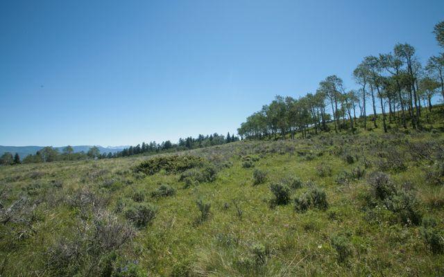 92 Pine Marten - photo 3