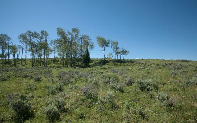 92 Pine Marten - photo 5