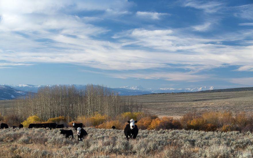 Nottingham Ranch 1690 Derby Mesa Loop - photo 7