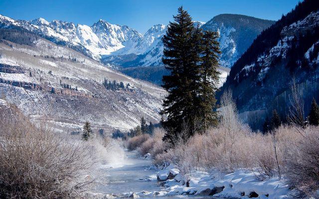 Aspen Tree 7 - photo 15