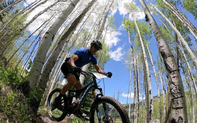 Aspen Tree 7 - photo 19
