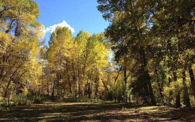 10107 Brush Creek Road - photo 11