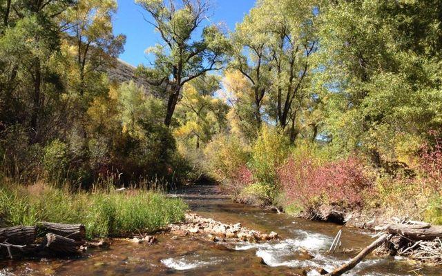 10107 Brush Creek Road - photo 5