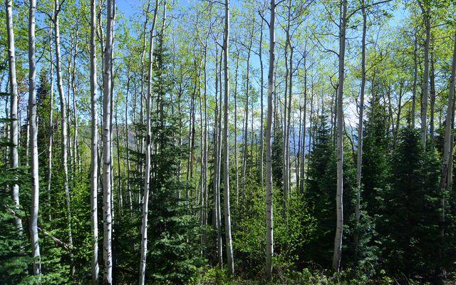 181 Summit Trail - photo 25