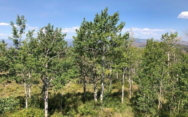 829 Gore Trail - photo 12