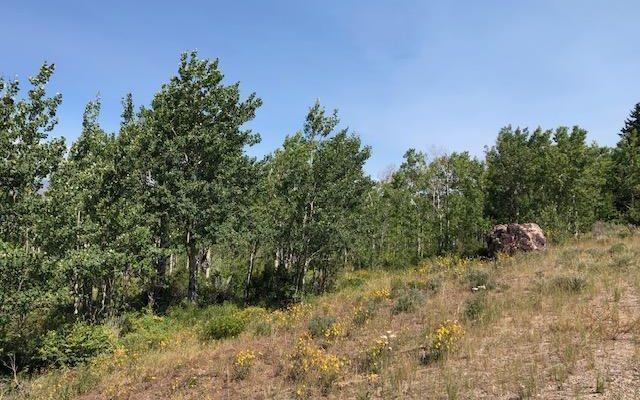 829 Gore Trail - photo 14