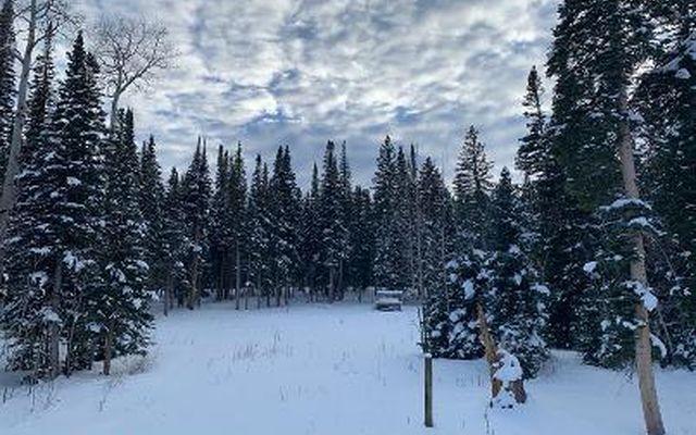 602 Granite Springs Trail - photo 13