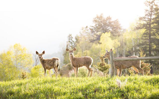 305 Jouflas Ranch Road - photo 1