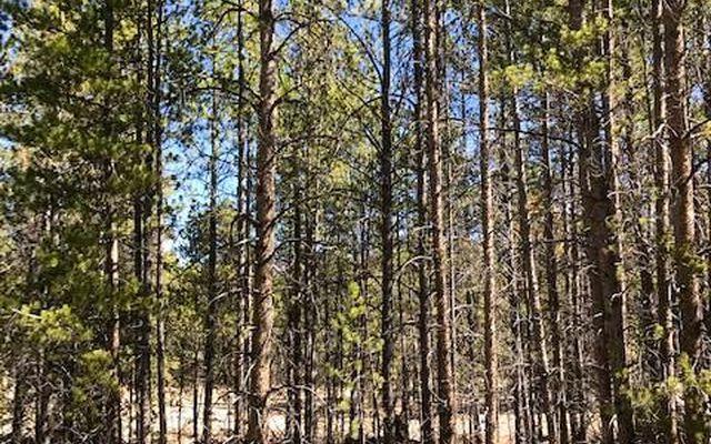 246 Birch Drive - photo 7