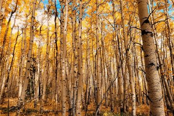 945 BREAKNECK PASS Court FAIRPLAY, CO
