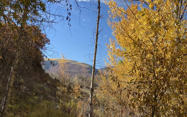 6902 Brush Creek Road - photo 4