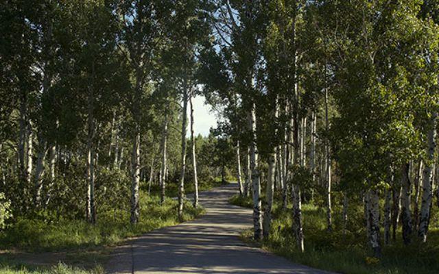 909 Ute Forest Lane - photo 49