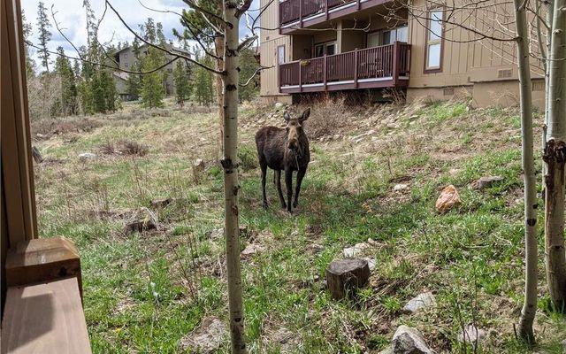 Buffalo Woods Condo 221 - photo 26