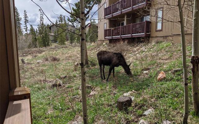 Buffalo Woods Condo 221 - photo 27