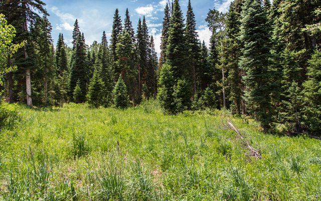 750 Granite Springs Trail - photo 14