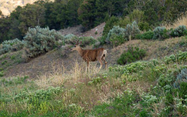 2108 Salt Creek Road - photo 5