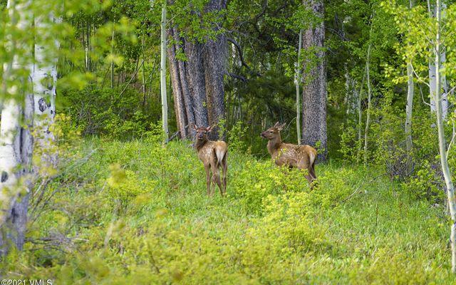 2400 Casteel Creek - photo 179