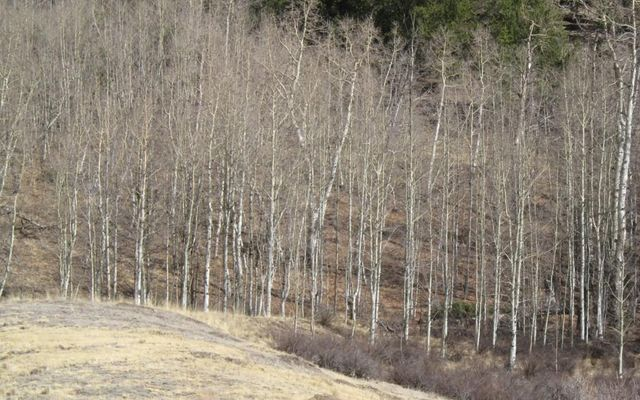 930 Ouray Trail - photo 15