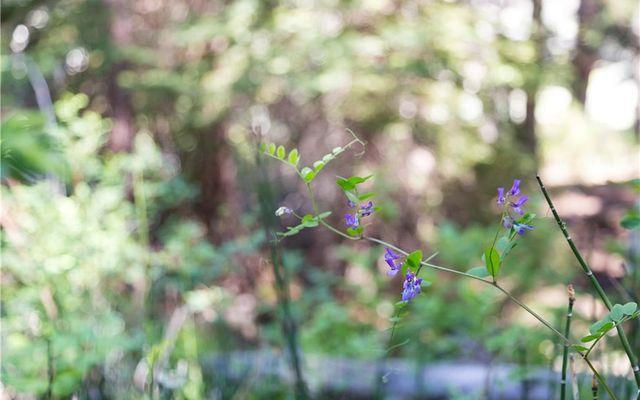 N/A Gore Pass - photo 24