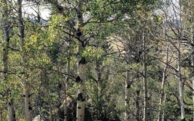 620 Apache Trail - photo 17