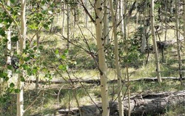 620 Apache Trail - photo 6
