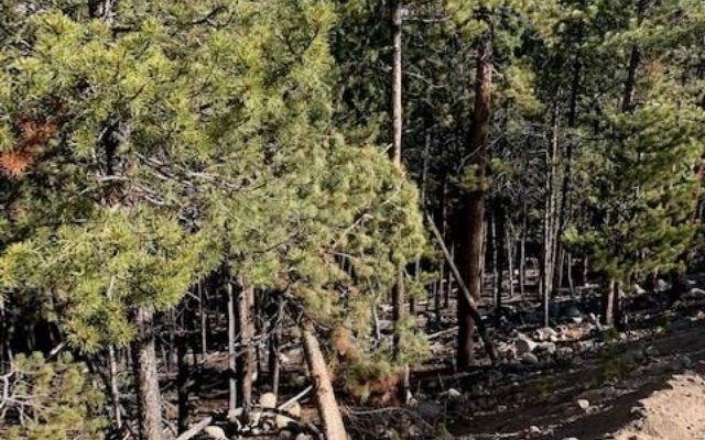 1259 Sequoia Drive - photo 2